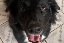 Doug / My dog.