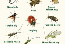 Garden insects