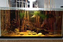 Biotoop Aquarium / de mooiste biotoop aquariums die wij zelf maken en verkopen worden hier laten zien!
