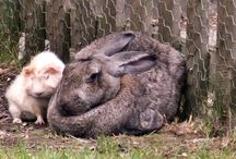 Bunnies / Rabbits are small mammals in the family Leporidae of the order Lagomorpha, found in several parts of the world.