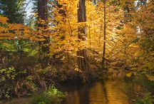Fall colors at Land Trust Preserves / Fall colors of aspen, vine maple and cottonwood light up Deschutes Land Trust's protected lands.