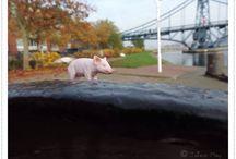 Schweinderl unterwegs im hohen Norden