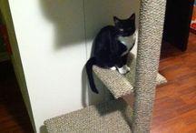 Kitty perches