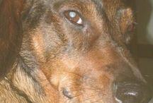 Paxy, casper / My dogs