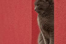 кошкиии