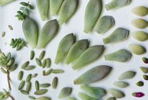 MAD ABOUT SUCCULENTS