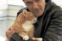 кошки и знаменитости