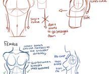 male vs female anatomy