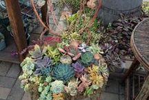 rostliny / Netradiční výsadba květin