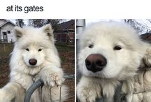 doggieeeeee