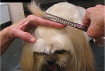 Dog Grooming / by Kyndra Kleiman