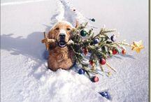 Новогодние и рождественские собаки и кошки