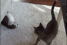 Cat Gif / Gatti animati