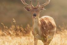 Animal Kingdom - In the Wild