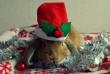 My Christmas bunny