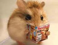 Hamsters!!!!