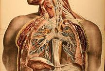 MEDiCAL iLLUSTRATiONS / by Sara Harvey