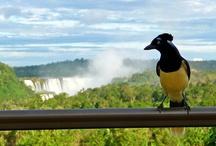 Argentina, Iguazú Falls