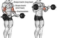 bodybuilding ön kol