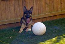 Varsity Pets Coupon Code / For Varsity Pets Coupon Code visit at - https://www.facebook.com/VarsityPetsCouponCode