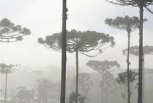 Arvores #Tree