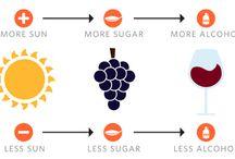 WINE SIMPLIFIED !! / FOOD + DRINKS