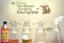 Topical Pet Remedies / Pet Health & Wellness Ideas