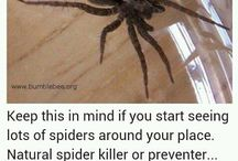 Spider repellant