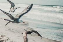 Strandfotographie