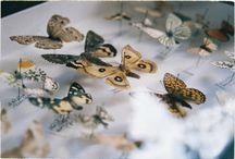 entomolgia