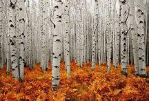 Birch is beautiful ❤️