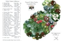 Dream Home:Garden and Flower Beds / Gardening and Flowers / by Gwen Braum