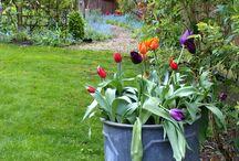 Home and Garden  / by Cresta Derry
