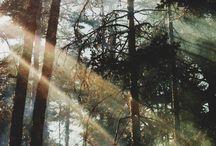 Natureza - Biomas