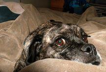 Duke-my buddy