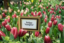 Tulipmania2017 / See art blossom before your eyes as Gardens by the Bay takes inspiration from one of the Netherland's most celebrated artists, Vincent van Gogh, in this year's Tulipmania Inspired.