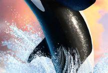 Orca <3