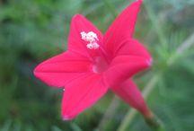 ÇİÇEKLER-FLOWERS