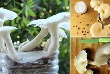 cultivo de hongos