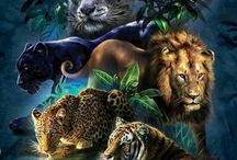 BIG CATS / The beauty of nature