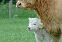 kor och andra djur