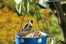 Birds Feeders / Food Recipies