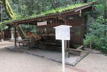 下鴨神社|みたらし祭り