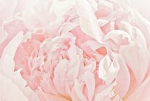 For The Love Of Pink / by Laura Hayden