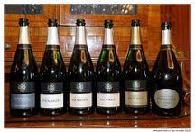 Naše vína / Our wines