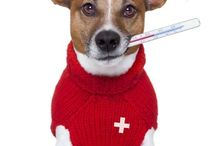 Pet Health Pet Health Tips Pet Health Care / Pet Health Care.All information related to Pet Health.How to Care Your Pet with Harmful Diseases.