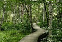 Boreal Forest Trail / Take a walk on the interpretive Boreal Forest trail. Learn about the flora and fauna in the Boreal Forest of interior Alaska at Creamer's Field Migratory Waterfowl Refuge.