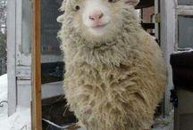 0 Sheep
