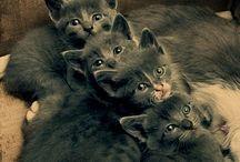Furry Friends / by Kimberly Tatum