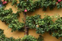 Hage / Flotte bilder og ideer til Solheimhusets hage